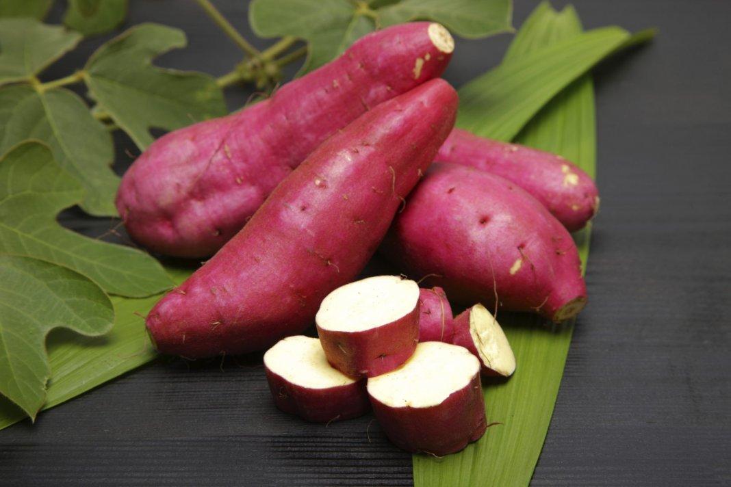 Resultado de imagem para A batata-doce é a chave para o fim da gastrite, refluxo, azia, e até mesmo úlceras! A batata-doce, pode ser a chave para o fim da gastrite, refluxo, azia, e até mesmo úlceras!